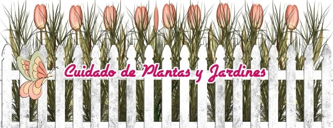 CUIDADO DE PLANTAS Y JARDINES