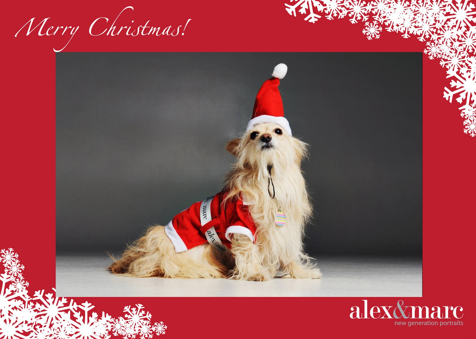 alex&marc new generation portraits: Christmas Pet Portraits