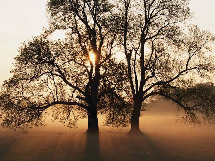 O Dia da Árvore