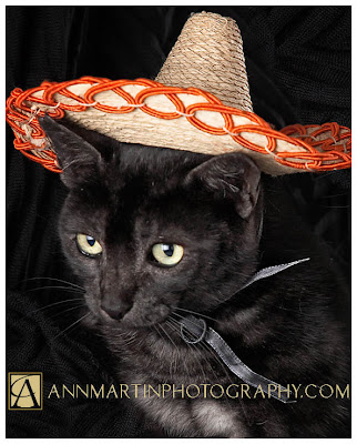 picture of cat in sombrero for cinco de mayo