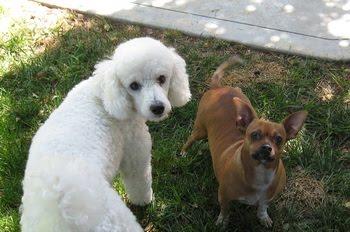 Puegeot & Poncho ( new buddies)