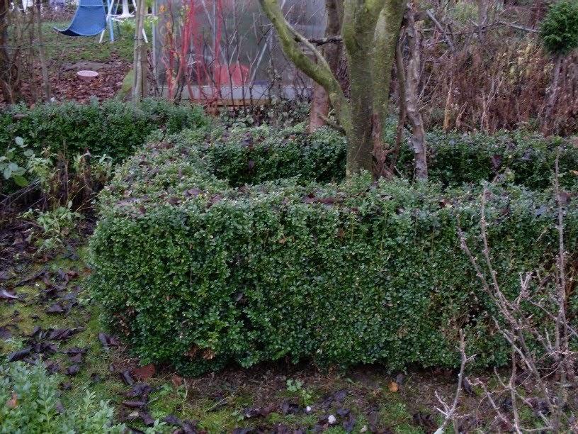 Garten anders noch mal buchsbaum buchsb ume als for Buchsbaum garten gestalten