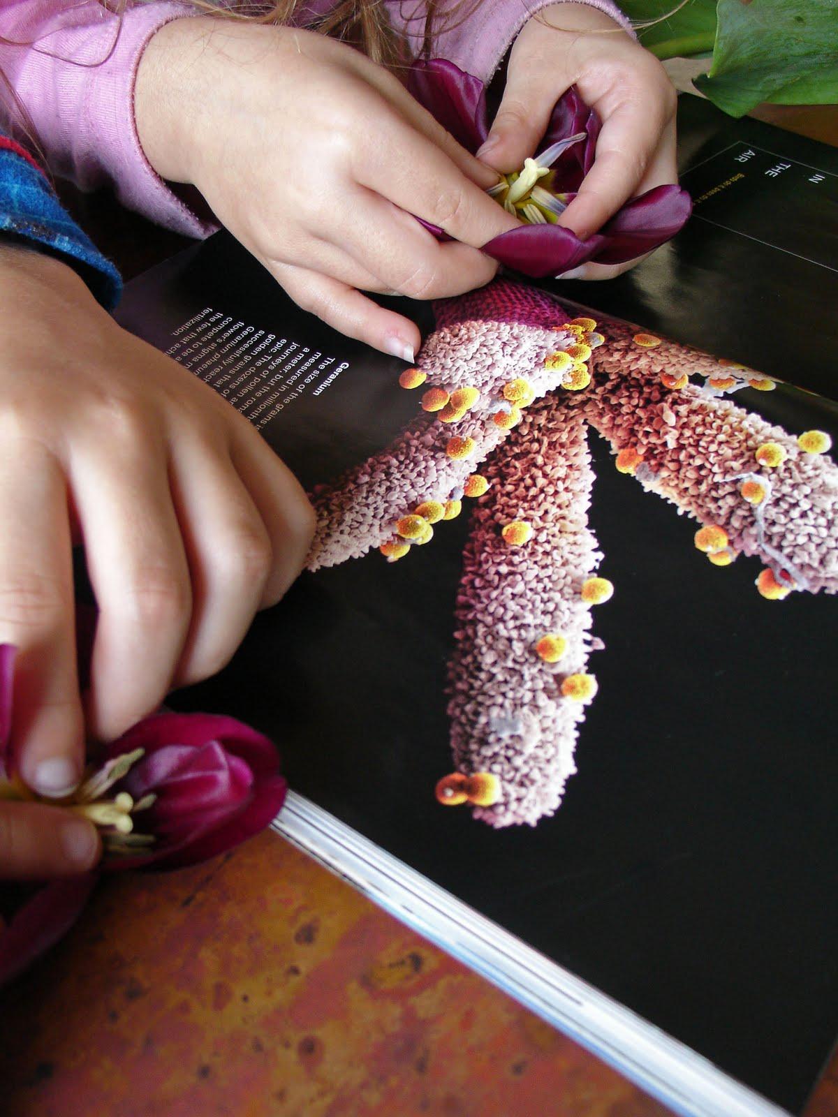 http://4.bp.blogspot.com/_4yWx8IDlqR0/TMpKNp3N2kI/AAAAAAAAD9o/d0Tb20VJ67M/s1600/1028flowers.jpg