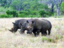 """The """"Big Five"""" in Kruger Park"""