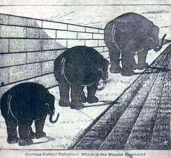 Biggest Elephant Illusion