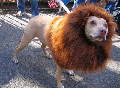 Lion or a Dog