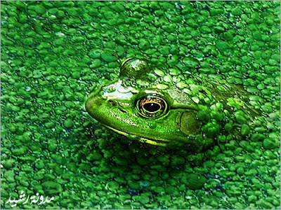 most beautiful photos for animals and insects