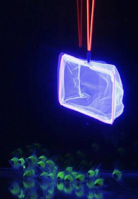Beautiful fluorescent fish