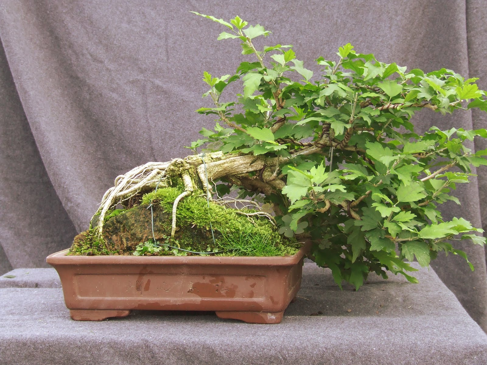 Your Bonsai Experience