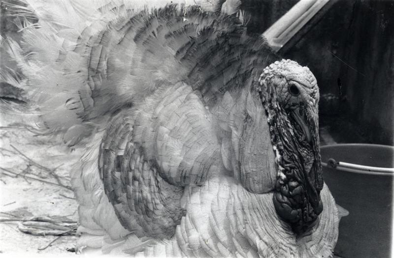 [mexico_turkey.jpg]