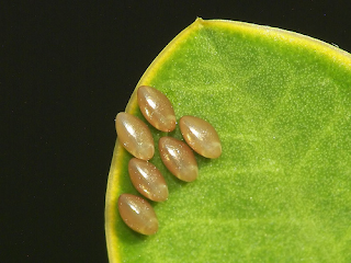 11 The Astonishing Eggs of Alien Nations