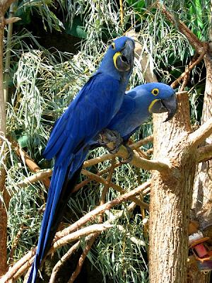 info unik dan menarik 10 gambar burung tercantik di dunia
