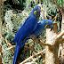 Jom tengok burung yang comel