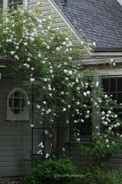 dig grow compost blog garden bloggers bloom day. Black Bedroom Furniture Sets. Home Design Ideas
