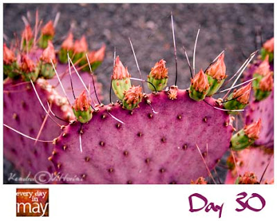Incredibilmente...cactus!