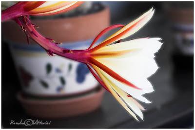 Profilo di Fiore