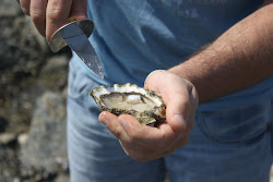 Oesters rapen Texel