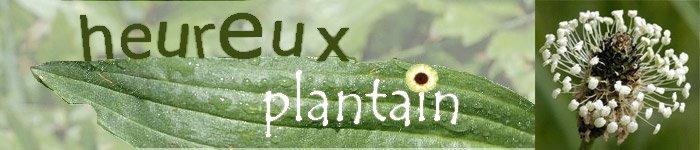 heureux plantain