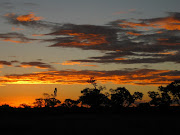 Yet the best sighting of the evening was the glorious sunset. (sunset night ride kruger np mpumalanga za )