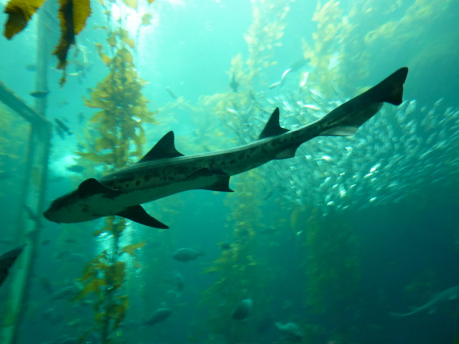Best Friends Norwalk Wild Animal Wednesday Shark Week At