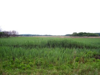photo of wetlands, Neponset River Greenway, Dorchester, MA