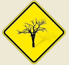 """""""Nem tudo que é torto é errado. Vejam as pernas do Garrincha e as árvores do Cerrado""""."""
