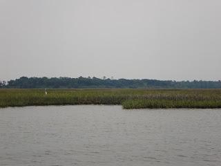 Bird In The Beach Marsh