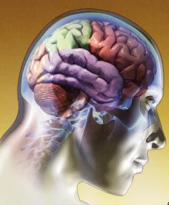estructura cerebral
