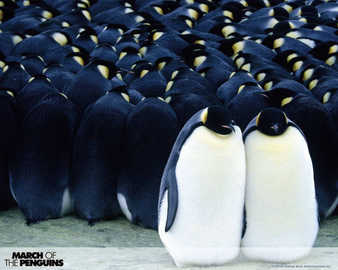 march of the penguins ending a relationship