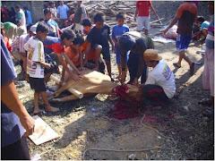 Bangkalan-JATIM: Cabe Rawit Madura ...