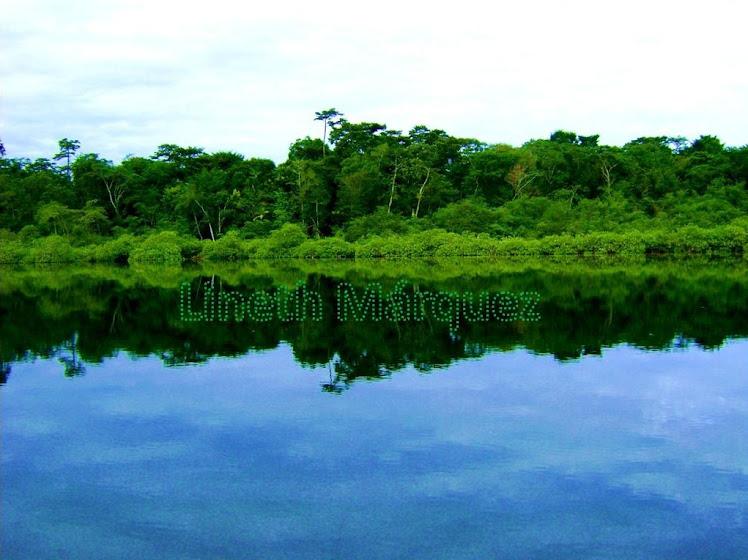 Bahía de Los Delfines Bocas del Toro, Panamá