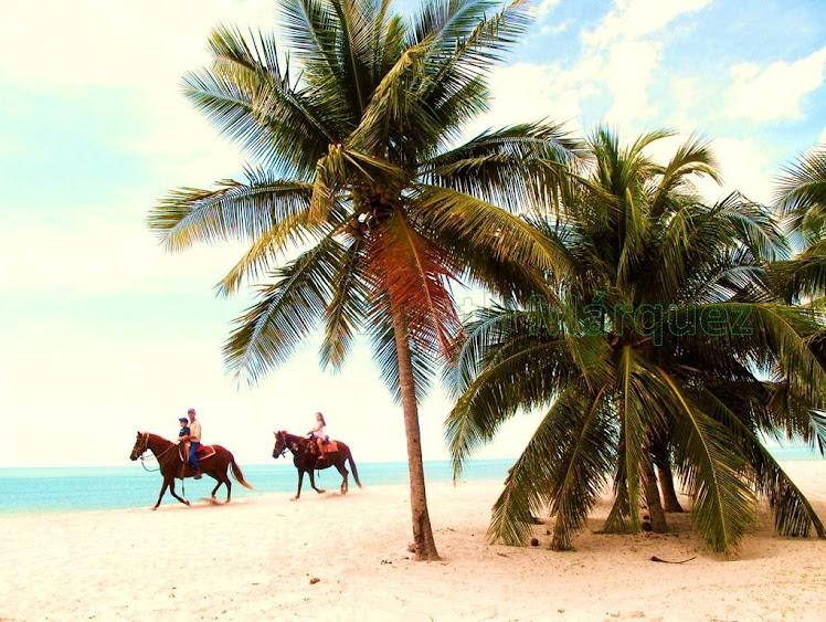 Playa  caballos