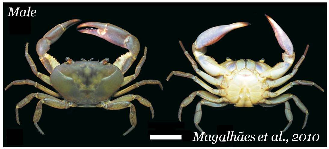 Freshwater crustaceans of South America