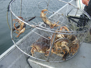 Virginia Beach Crabbing Season