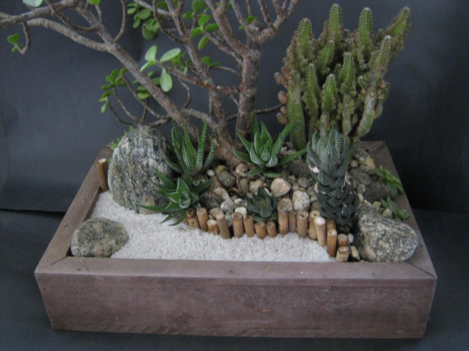 mini jardins em vidro: : Mini-Jardins de Suculentas em Vidro e em cachepô de madeira