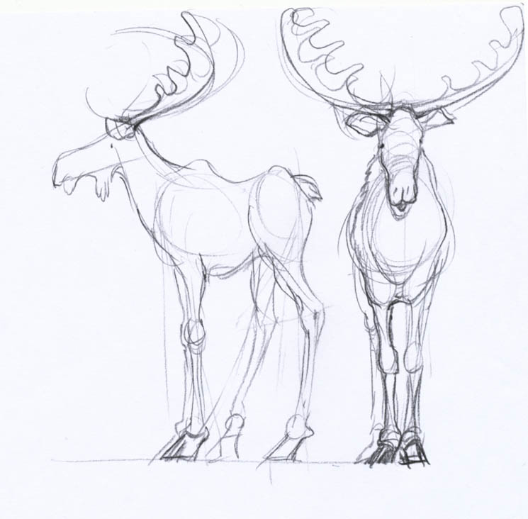 1000 images about moose on pinterest moose tattoo for How to draw a moos