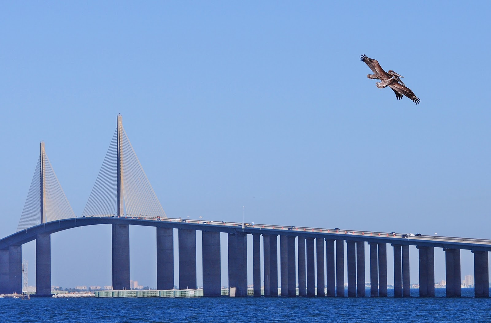 Dina 39 s city wildlife adventures sunshine skyway fishing for Tides 4 fishing skyway