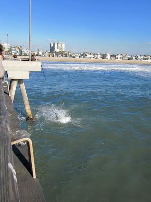 photo de surf 4955