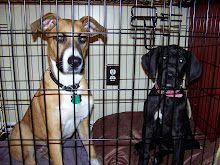 Max & Sadie In Jail