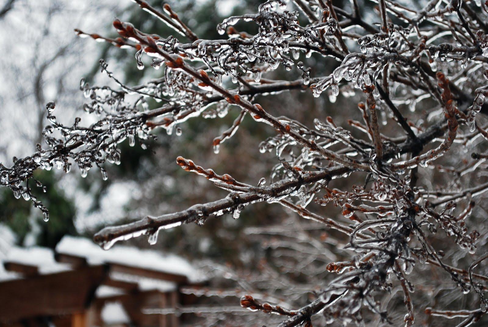 [Winter+09+022+(2)]