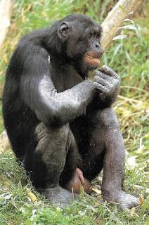 Stories chimpanze sex