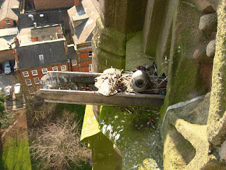 View of tower cam and the remains of a lapwing
