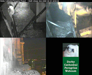 All was quiet on the nest platform al 11pm when this snapshot was taken.