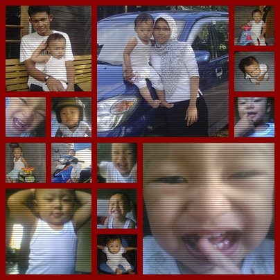 alni family
