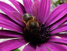 Insectos polinizadores