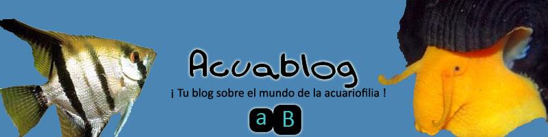 Acuablog