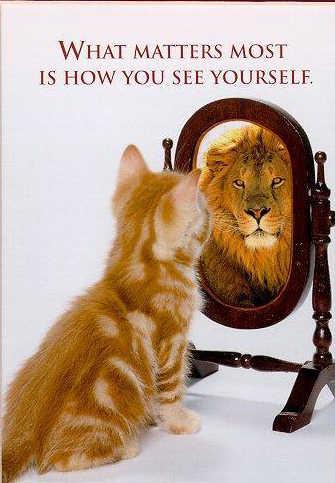 cat+mirror.jpg