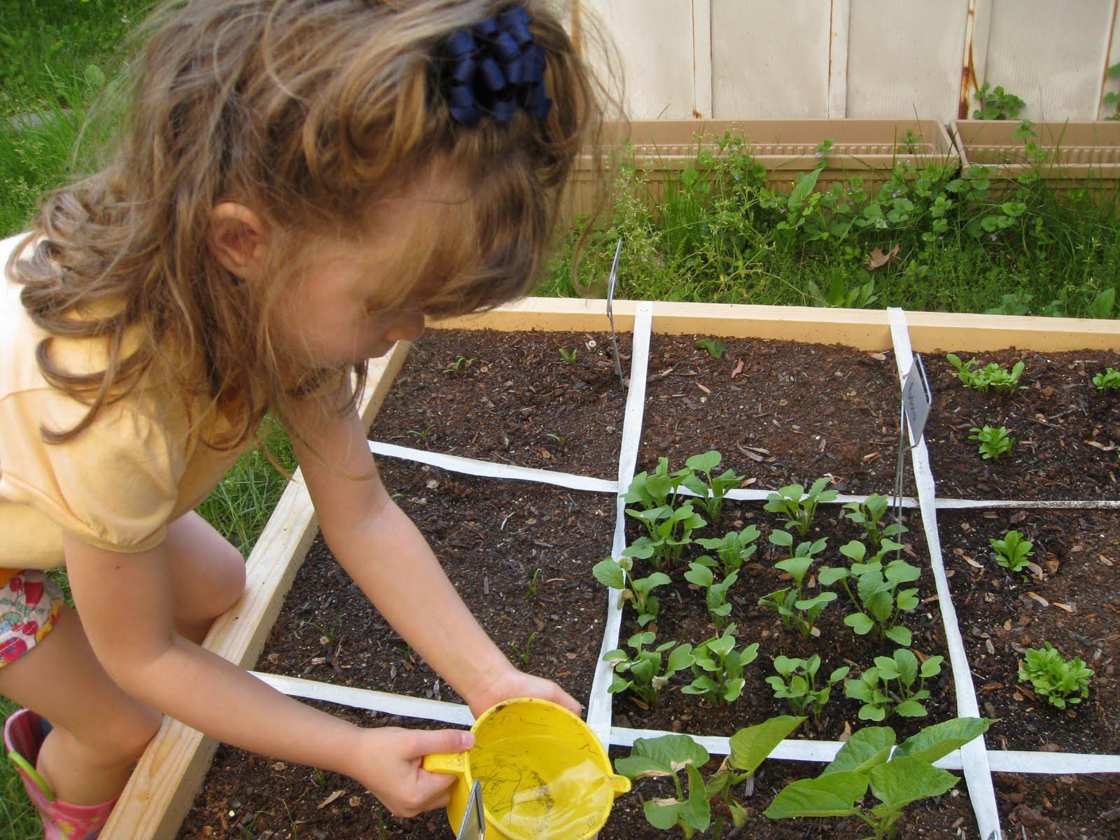 Square Foot Gardening-Progress! - Moneywise Moms