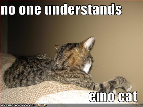 no one understands emo cat
