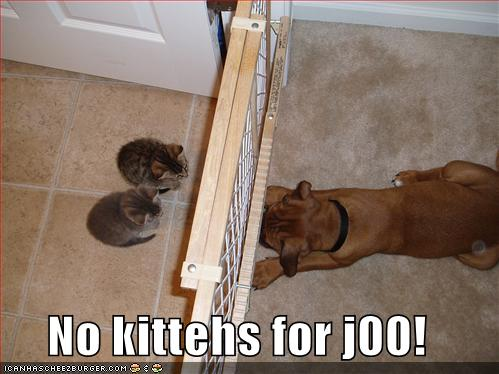 No kittehs for j00